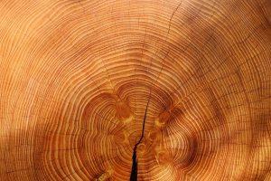 Best Stain For Cedar Swing Set