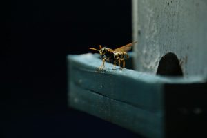 How to Keep Wasps Away from Playsets